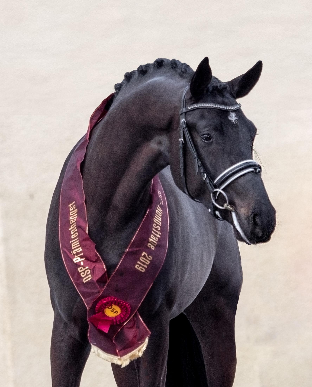 Bohemian stallion