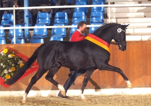 ETALON HILKENS BLACK DELIGHT -  DEUTSCHES REITPONY
